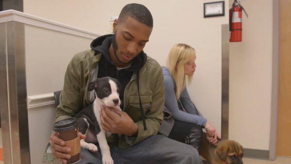 PAWS Animal Adoption